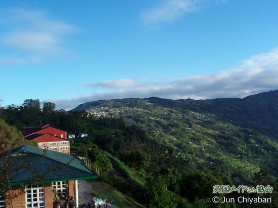 ジュンチヤバリ茶園の写真をローチャン氏から頂きました。