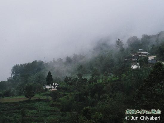 ジュンチヤバリ茶園